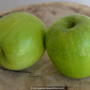 MALUS domestica 'Granny Smith'