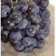 VITIS vinifera 'Aladin'