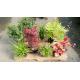 KIT plantes en main 'Peace'®