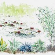 Le jardin naturel, écologique
