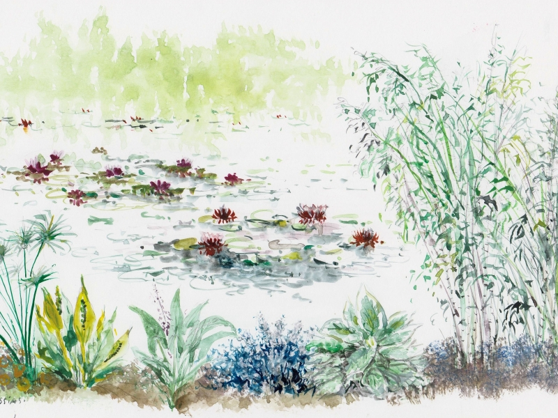 Un bassin, une mare, une rive